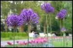 Van Hoa Park